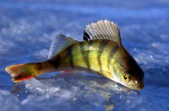 Биться как рыба об лед