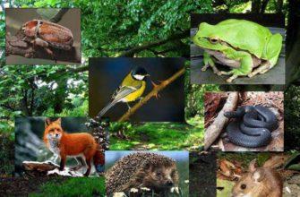 Биогеоценоз и экосистема - что это такое и отличия