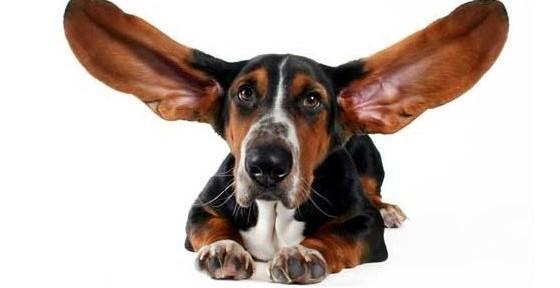 Развесить уши