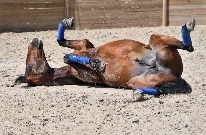 Конь не валялся
